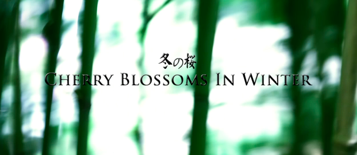 Cherry Blossoms in Winter Tiger House Films Los Angeles Production Company
